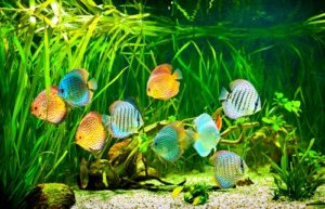 How to Move Tropical Fish Long Distance