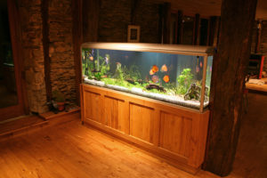 Moving Your Fish Tank to Another Country